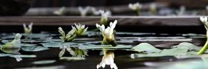 Hawthorne Reflections (WEB-SLIDER)
