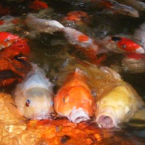 fish 001f