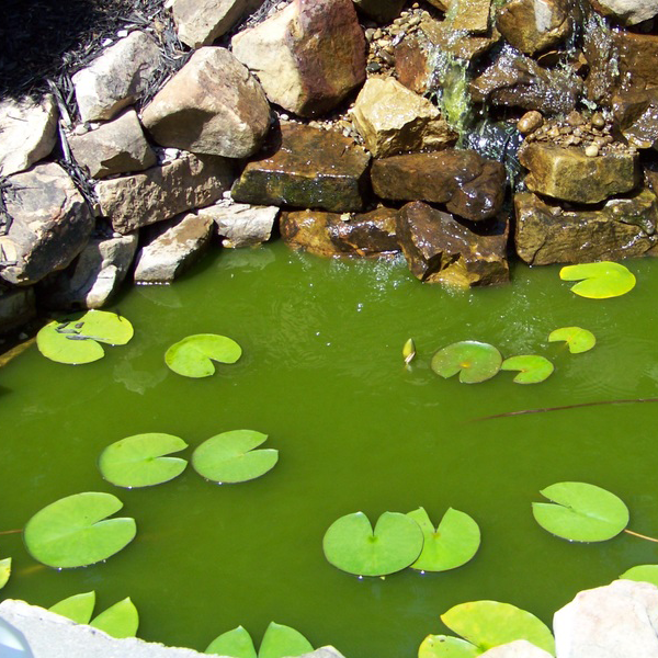 Does your pond look like this?