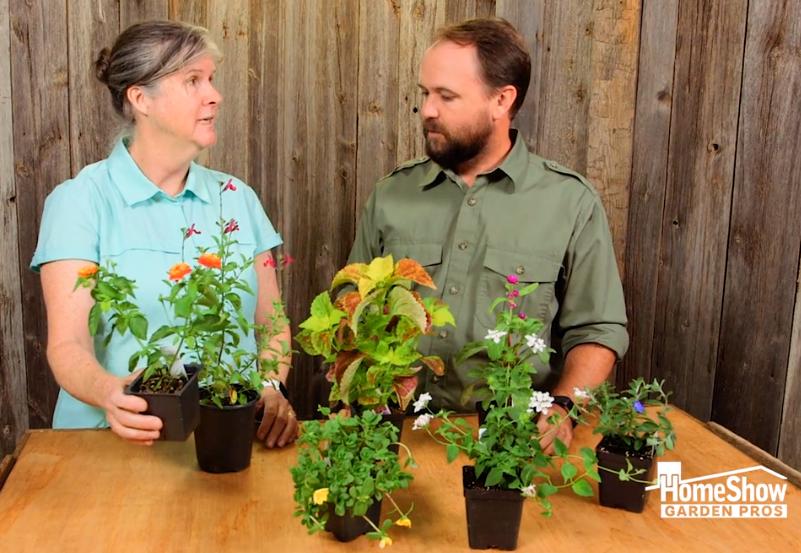 Perennials: Plants for the Year Round Garden