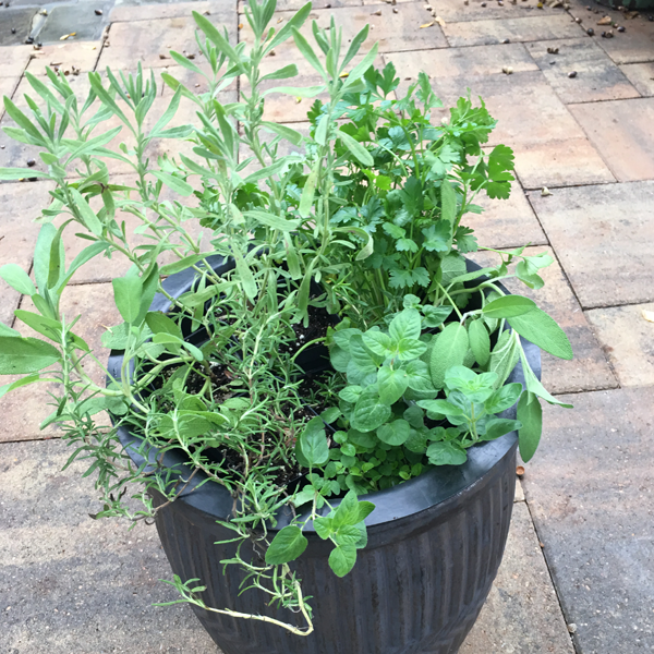 Parsley, Sage, Rosemary and…..