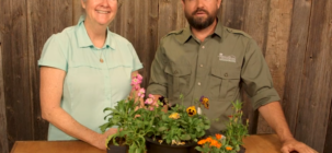 Deadheading Your Annuals